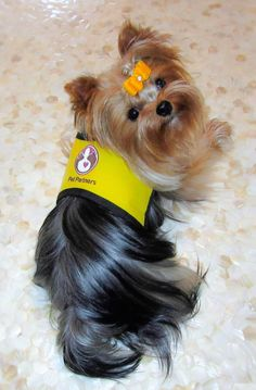 I'm pleased to announce that Boo the Yorkie and I have made our debut as a Pet Therapy Team. We passed the Pet Partners examination in May. Since then, we have investigated a wide variety of volunteer options. Due to … Continue reading →