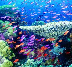 save our coral reefs