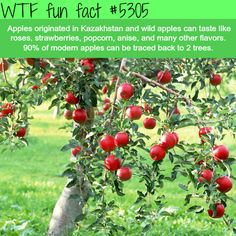 WHOA! ...Apples that taste like Strawberries, popcorn? - YES Please...  ~WTF fun facts