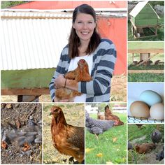 Fabulous info on raising chickens at home :)  From Bless This Mess!