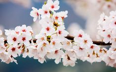 Spring Festivals 2017 (March - May) | Official Korea Tourism Organization