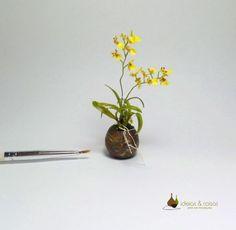 Miniature orchids.Scale 1:12