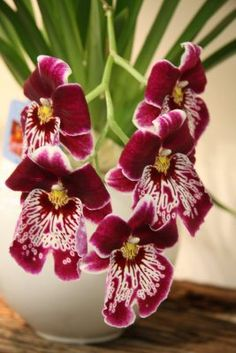 Orchid plants, a perfect house plant.