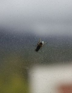 Муха на грязном окне - Fly on a dirty window Northern Lights, Explore, Nature, Travel, Roaches, Bows, World, Naturaleza, Viajes