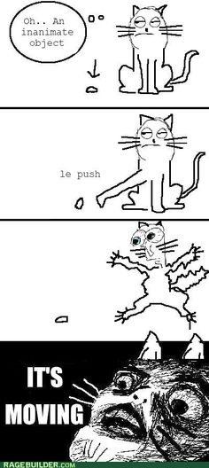 Cat Owners Understand