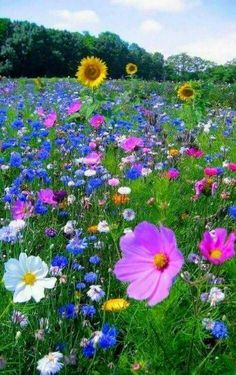 1565 Best Fields of flowers images in 2019
