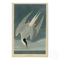 Vintage Arctic Tern