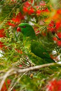 Incredibly beautiful Bird (parrot maybe? I wish all the pins were like this, showing the birds in the wild. too many of the pins look so photoshopped, etc Kinds Of Birds, All Birds, Love Birds, Pretty Birds, Beautiful Birds, Animals Beautiful, Exotic Birds, Colorful Birds, Wow Photo