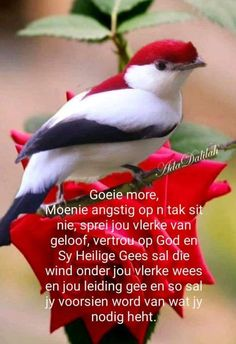 Cute Picture Quotes, Cute Pictures, Afrikaanse Quotes, Goeie Nag, Goeie More, Good Morning Quotes, Words, Fancy, Poster