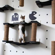 Bring out your cat's wild side Extremely sturdy, tested to hold 85 lbs Fully Customizable Captivating and beautiful We can help you design the bridge of your dreams