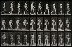 Animals and Humans in Motion by Eadweard Muybridge | Retronaut
