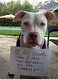 I kill lizards, then I throw their dead bodies into the swimming pool.