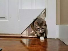 Pets Home : KittyKorner Turns Corner Of Door Into a Cat Pass Crazy Cat Lady, Crazy Cats, Pet Door, Cat Room, Cat Furniture, Litter Box, Dog Cat, Doors, Cat Enclosure