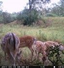 Wildlife Rescue Magazine suggests Uway NT50B Deer daytime: Uway NT50B Deer during the day. Lee Parker.