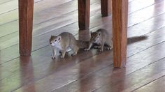 Visitors to our breakfast table at Xigera #OkavangoDelta