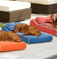 Our Memory Foam Contour Pet Lounger is the ultimate lounging spot for your pet.