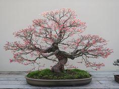 A imagem pode conter: planta, árvore e atividades ao ar livre