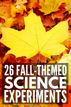 Hands On Fun: 26 Fall Science Experiments for Kids We Love – kinder Kindergarten Science Experiments, Science For Kids, Preschool Kindergarten, Classroom Activities, Stem Activities, Science Experiments For Toddlers, Preschool Science Experiments, Harvest Activities, Science Jokes