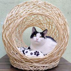 Pet Furniture, Diy Furniture Projects, Crazy Cat Lady, Crazy Cats, Sisal, Cat Gym, Cat Care Tips, Pet Home, Diy Stuffed Animals