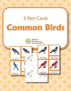 Common Birds- Montessori 3 Part Cards with color illustrations and blacklines too.  {FREE}