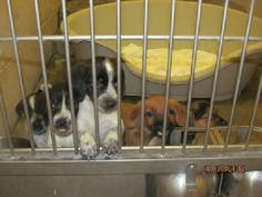 URGENT!!!! Please rescue these adorable beagle mix puppies BUCKIE & CARLA! PIKEVILLE, KENTUCKY... https://www.petfinder.com/petdetail/29696242/