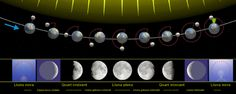 Activity to teach phases of the mooon
