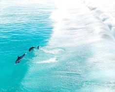 Whales and dolphins are out an about and enjoying the ocean with us - join us on the water this summer Summer Days, Summer Fun, Aerial Photography, Western Australia, Paddle, Dolphins, Seaside, Around The Worlds, Ocean