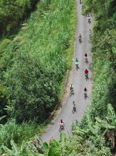 """Five coolest things to do in #Jamaica: """"Blue Mountain Bicycle Tours offer exhilarating treks down mountainsides, through picturesque coffee plantations and past tumbling waterfalls. The route stretches between nine and 18 miles, mostly downhill. With one guide per eight cyclists, the tours are suitable for novices and popular with couples and families looking for an adventure away from the beach, if just for an afternoon."""""""
