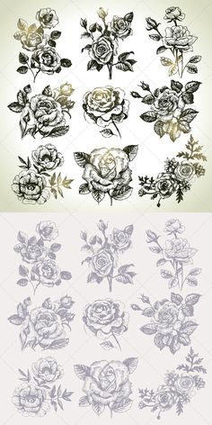Hand Drawn Floral Set #GraphicRiver Hand drawn illustrations of different varieties of a rose flowers in vintage style. This illustrations can be used in design of printed materials (brochures, invitations, postcards), in web design, etc. No bitmaps, only vector used. Zip file contains fully editable EPS 8 vector file, AI CS vector file and high resolution pixels RGB Jpeg image. Created: 30January13 GraphicsFilesIncluded: JPGImage #VectorEPS #AIIllustrator Layered: No MinimumAdobeCSVersion: