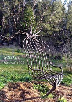 Topiary Sanatı - Bitkilere form vermek - Page 2 - agaclar.net