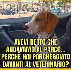 povero povero cane la sua vita e finita sigh