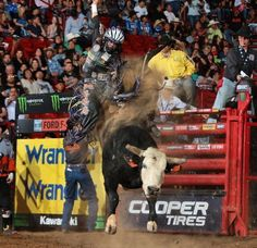 Chad BergerVerified account @chadberger Mar 20, 2017. Pearl Harbor does it again 46.75 bull score @TeamCooperTire @SweetProFeeds @AmericanHatComp @LubriSynHA. Hey, that's four scores over 46 points this year so far.