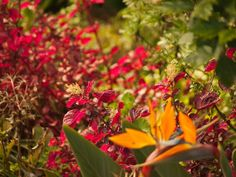 Funchal - flora
