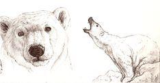 Cute polar bear drawing drawing polar bears art etc белые ме Bear Face Drawing, Polar Bear Drawing, Polar Bear Face, Polar Bear Tattoo, Cute Polar Bear, Polar Bears, Drawing Drawing, Animal Sketches, Animal Drawings