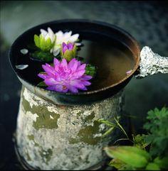 art and beautiful lotus flower - zen - photography inspiration Wabi Sabi, Lotus Symbol, Feng Shui, Lotus Bleu, Serenity Garden, She Is Fierce, Water Lilies, Water Garden, Ikebana