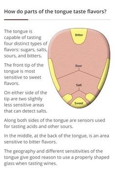 Areas of the tongue