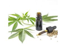 CBD oil is high in CBD and is extracted from the cannabis plant. Both the cannabis oil and Cannabidiol oil play different roles in sleep. Below, we will look at the roles of CBD on sleep. Marijuana Plants, Cannabis Plant, Cannabis Oil, Stocks Today, Self Medication, Massage Lotion, Oils For Sleep, How To Get Sleep, Anxiety