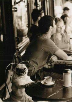 My two favs: Pugs & Coffee