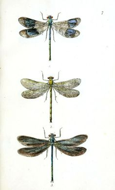 http://vintageprintable.swivelchairmedia.com/wp-content/uploads/2011/04/Animal-Insect-Dragonfly-1-621x1024.jpg