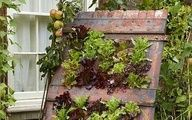"""Lettuce """"wall"""" made by drilling holes in an old door and planting lettuce in yoghurt pots... perhaps instead filling an old pallet as a vegetable garden?"""