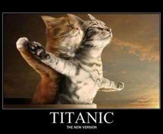 Titanic katten