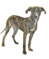 ALEXIA....352-746-8400 is an adoptable Hound Dog in Inverness, FL.  Our small adoption fee includes: spay/neuter, vaccinations, microchip, worming, flea pill, blood test,  and free obedience trainin...