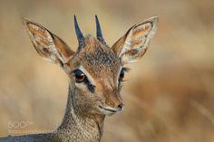 Eyelashes by MogensTrolle #animals #animal #pet #pets #animales #animallovers #photooftheday #amazing #picoftheday