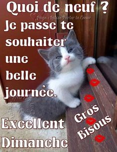 Photos, Animals, Computer Mouse, Welcome, Handsome Quotes, Pictures, Animales, Animaux, Animal