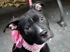 Nycacc