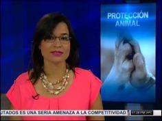 La Red De Protección Animal Que Se Teje En El País #Video Mayo, Videos, Countries