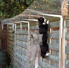 katten afscheiding tuin