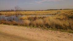 Wierdense veld