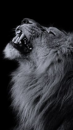 Lion Iphone Wallpapers on WallpaperPlay wallpapers, Hintergrund - Lion Wallpaper Iphone, Wild Animal Wallpaper, Wallpaper Backgrounds, Iphone Wallpapers, Iphone Backgrounds, Desktop Pics, Wildlife Wallpaper, Hd Wallpapers 1080p, 1080p Wallpaper
