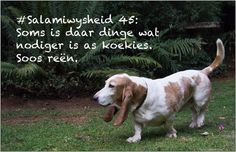 Jackson, Dogs, Animals, Do Your Thing, Animales, Animaux, Animal Memes, Animal, Pet Dogs